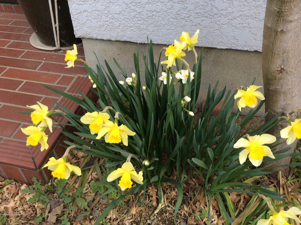 二重生活の春