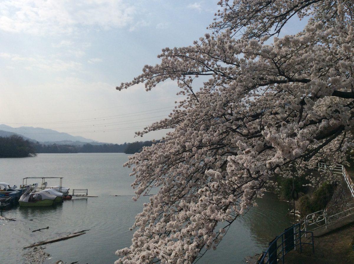津久井湖までお散歩