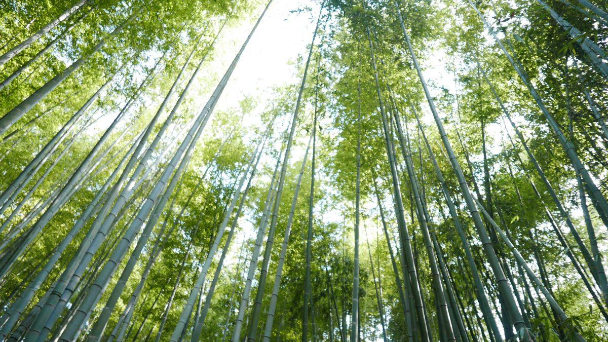 鎌倉小旅行の一日